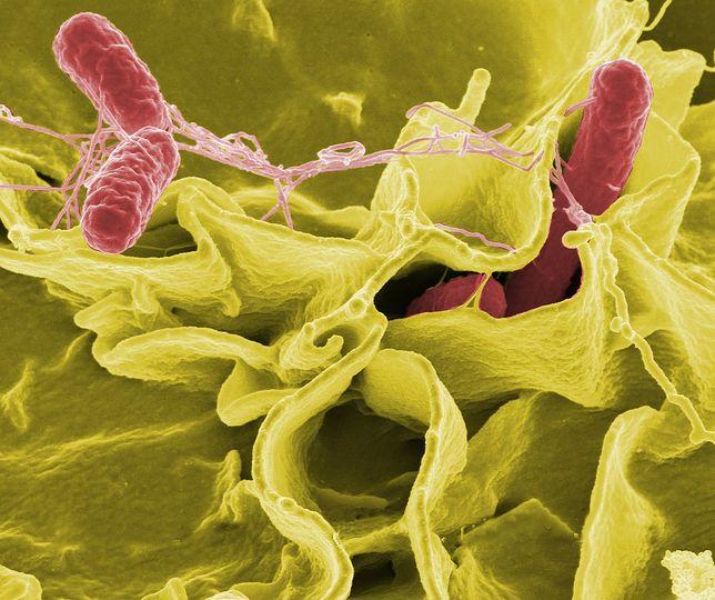 Uleczalne choroby niedługo znowu mogą być śmiertelne.