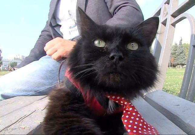 Zgłoszono kota do wyborów parlamentarnych.  Oczywiście w Rosji