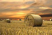 Zasiewają pola na dziko, by dostać dopłaty obszarowe