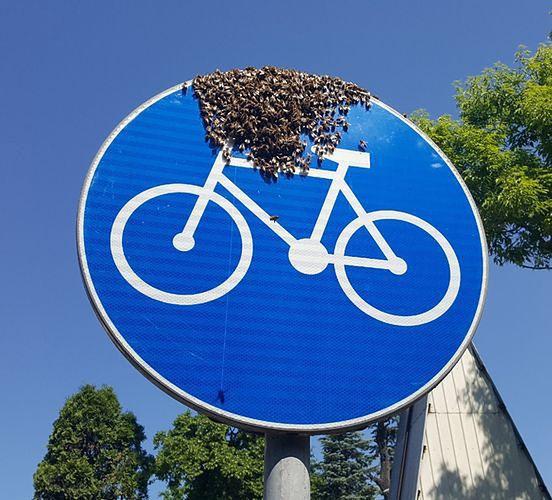 Warszawa. Ciekawe miejsce odpoczynku roku pszczół. Przysiadły na rowerze wymalowanym na znaku drogowym, ustawionym przy ścieżce rowerowej na Żeraniu