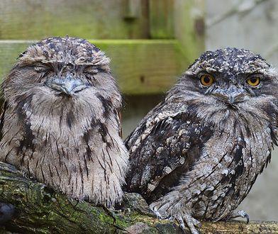 Naukowcy wiedzą jaki ptak przyciągnie najwięcej uwagi na Instagramie