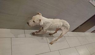 27-latka, która głodziła psa, została aresztowana na trzy miesiące