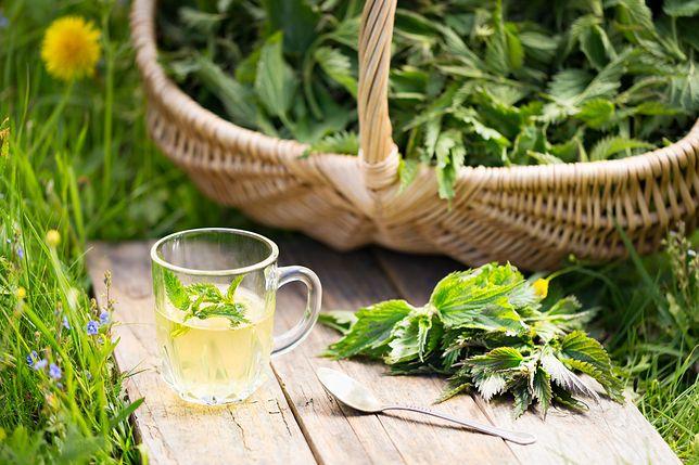 Pokrzywa ma szerokie zastosowanie w kosmetyce i medycynie ludowej.