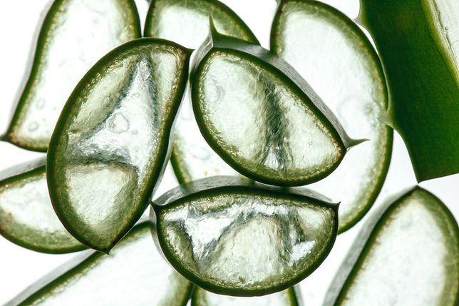 Ekstrakt z aloesu to same korzyści dla skóry