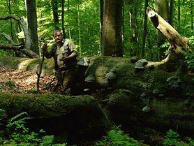 Czy należy bać się lasu? Leśnik odpowiada zatroskanej mamie