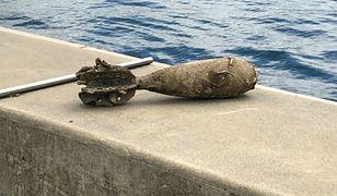 Bomba z czasów II wojny leżała na dnie zatoki. Nurkowie znaleźli ją przypadkiem
