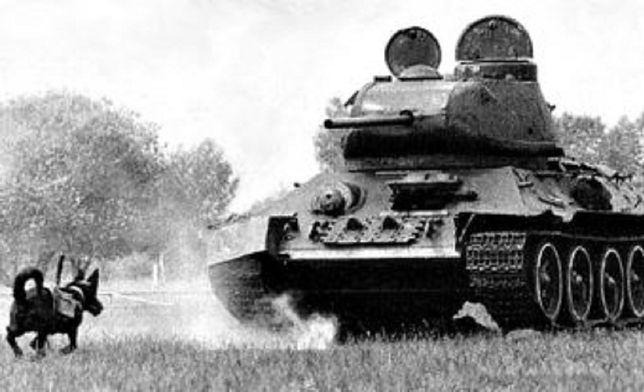 """""""Najdziwniejsza"""" broń II wojny światowej. Psy miały pokonać czołgi"""