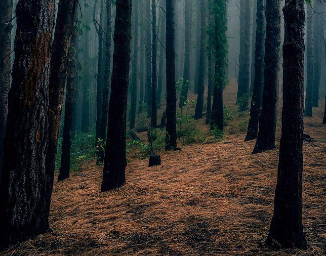 Niezwykłe znalezisko w czeskim lesie