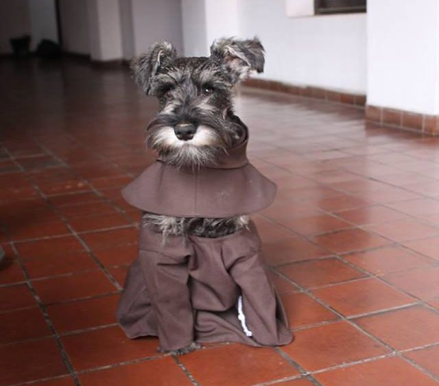 Pies zakonnikiem – cały świat nabrał się na żart Polaka