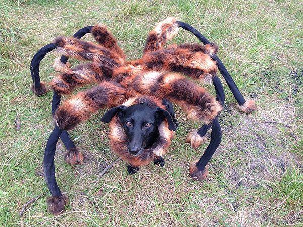 Giant Mutant Spider Dog