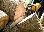 Zakaz handlu nielegalnie wyciętym drewnem