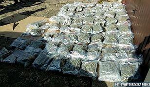 Policjanci znaleźli łącznie 66 worków z marihuaną.