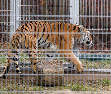 Dyrektor poznańskiego zoo otrzyma 10 tys. zł nagrody