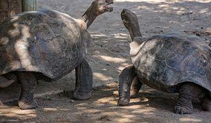 Nietypowe przestępstwo. Z parku narodowego ukradziono żółwie