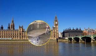 Wielka Brytania. Wieloryb utknął w Tamizie