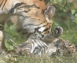 Wielki sukces w polskim zoo. Jest najrzadszy na świecie