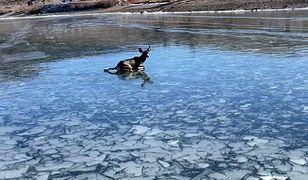 Jelonek nad jeziorem w stanie Utah