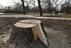 Na jakich zasadach można wycinać drzewa po zmianach przepisów?