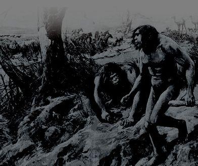 Hesperopithecus miał być brakującym ogniwem ewolucji