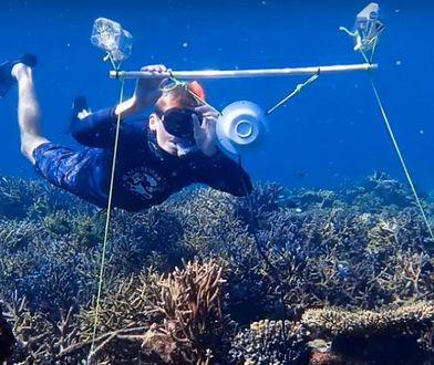 Naukowcy wabili ryby dźwiękami imitującymi te występujące w okolicach zdrowych koralowców