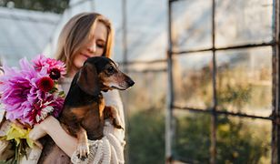 Sprawdzamy, czy istnieją rasy psy dla alergików