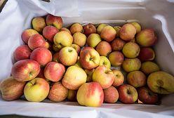 Rekordowe ceny jabłek. Sadownicy mają powody do zadowolenia