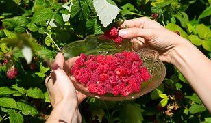 Ceny malin spadają, ale kończy się sezon truskawek
