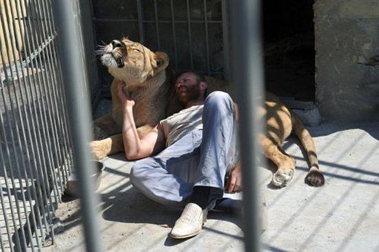 W klatce z lwami przez 35 dni