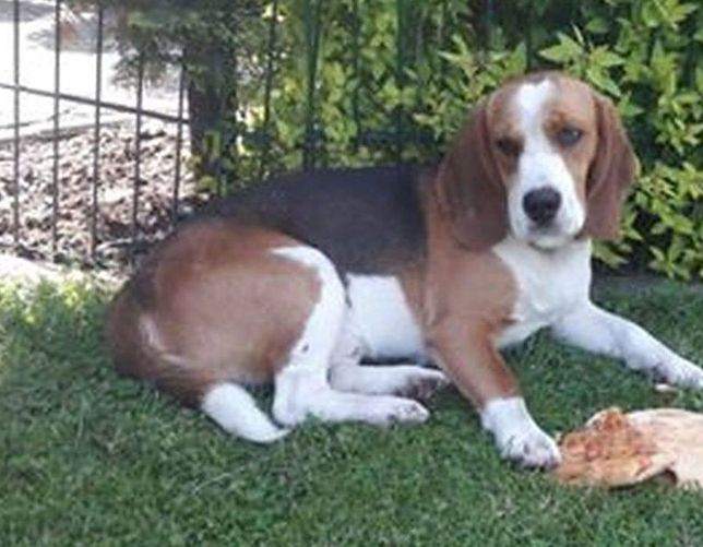 Pies Leon miał zaledwie rok i dwa miesiące