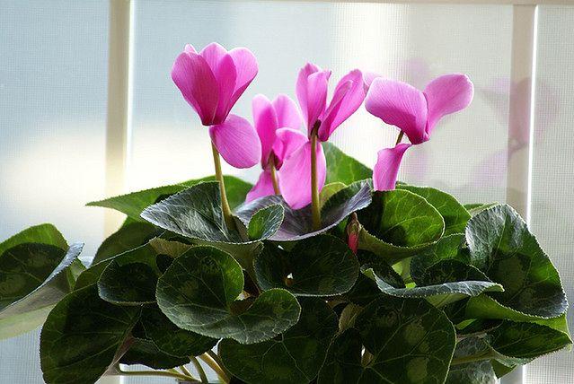 Rośliny domowe a wilgotność