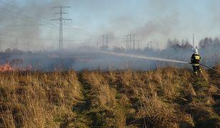 Wiosna trwa dopiero kilka dni. A strażacy już walczą z pożarami traw