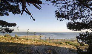 Dania postawi ogrodzenie na granicy z Niemcami