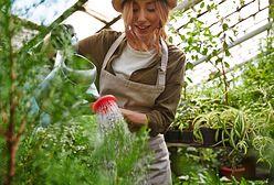 Jak podlewać ogród, by nie płacić ogromnych rachunków za wodę?