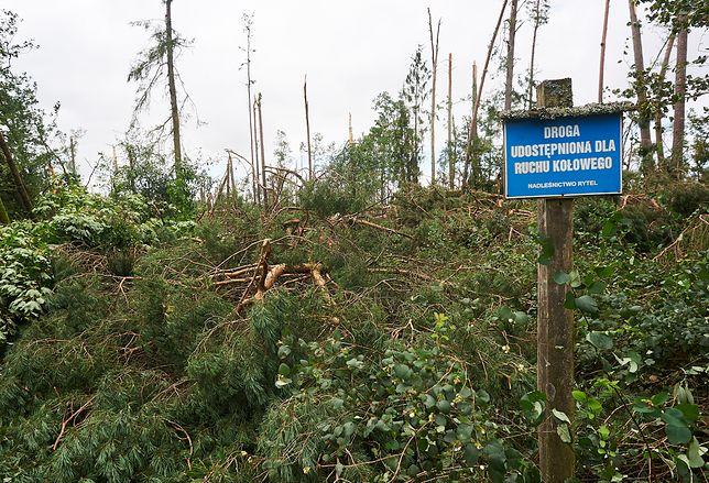 Zniszczony przez nawałnicę las w Suszku, gdzie wypoczywali harcerze z łódzkich okręgów ZHR.