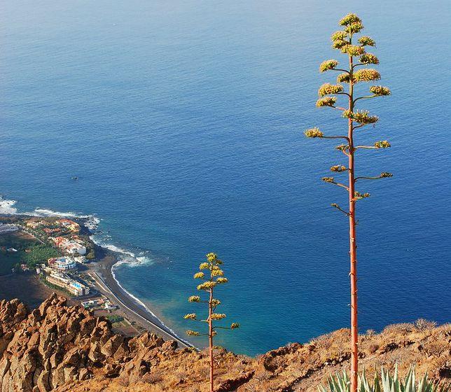 Atrakcje Wysp Kanaryjskich - La Gomera