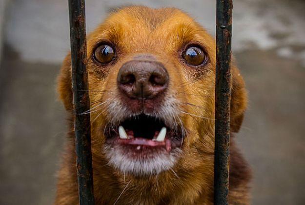 Sądy w Polsce wydają coraz surowsze wyroki za znęcanie się nad zwierzętami.