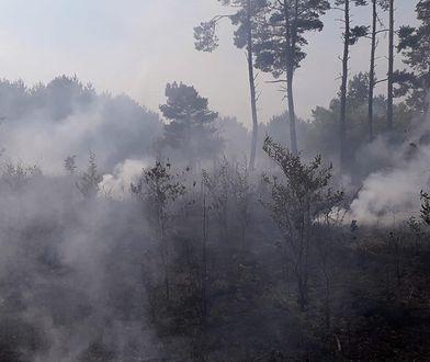 Pożar lasów wybuchł po obu stronach trasy S3 pod Gorzowem Wielkopolskim w okolicach Marwic i Santocka