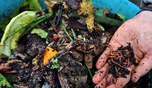 Udział dżdżownic w emisjach dwutlenku węgla z gleb - przeszacowany
