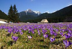 Najpiękniejsze miejsca w polskich Tatrach