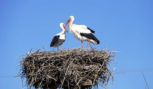 Okoliczności śmierci ptaków wyjaśnią przyrodnicy