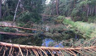 Rzeka i powalone drzewa w okolicach wsi Rytel. To tu szkody są największe.