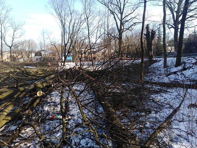 Milanówek. W centrum wycięto ponad 60 drzew