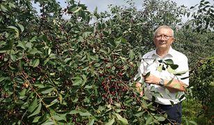 Po zbiorach wiśni, wójt gminy Błędów Marek Mikołajewski zaprasza na zbiory jabłek