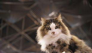 NIK: Program sterylizacji zwierząt powinien powrócić