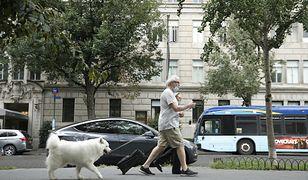 Niemcy. Zmiany dla właścicieli psów