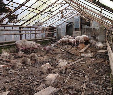 Małopolska. Zwierzęta żyły w skandalicznych warunkach