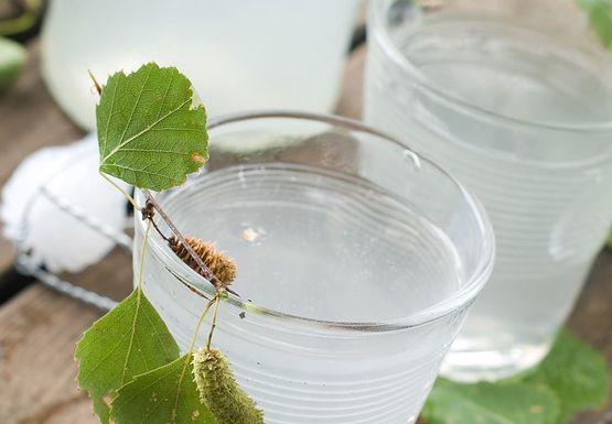 Dlaczego warto pić sok brzozowy?