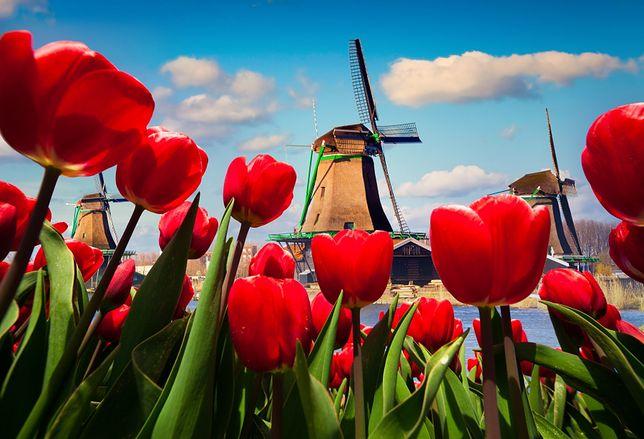Holandia, Belgia – gdy kwitnie cały świat