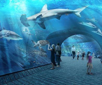 Oceanarium w Gdańsku będzie skończone w 2022 roku