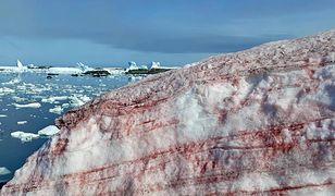 """""""Krwawy"""" śnieg uchwycony na zdjęciu przez ukraińskich badaczy"""